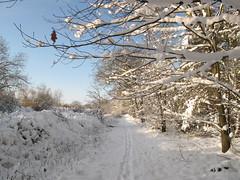 Merry Christmas (ToJoLa) Tags: winter snow nature canon landscape walk sneeuw natuur best merrychristmas kerstmis chrismas landschap 2010 wandeling noordbrabant canong10 nieuweheide