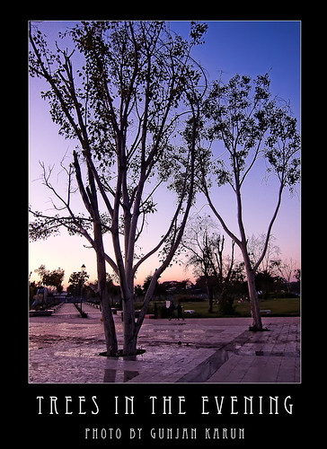 Trees in the evening
