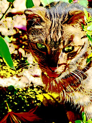 Look into my eyes (aViaTioNuT) Tags: cat hongkong victoriapark hdr coth rubyphotographer dragondaggeraward