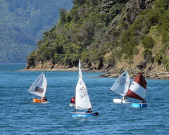 sailing optimist marlborough sounds dinghy