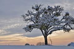 un arbre en hiver (Excalibur67) Tags: winter snow nature landscape nikon frost hiver ciel arbres alsace neige paysage 10010 coth coth5