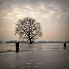 Ice packed... (Cassius Klay) Tags: winter tree ice water river licht boom ijs uiterwaarden waal greatphotographers naturepoetry ondergelopen ijsvlakte