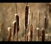 Aire y puros (__Blanca__) Tags: bokeh sigma laguna puros 70200mm palencia marrón fuentesdenava e620 tardeconamigos objetivoanalógico