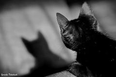 A sombra... (Yuricka Takahashi) Tags: brasil minas gerais sombra pb preto mg gato takahashi passado horizonte bh belo yuricka cpmpanhia