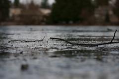 Como Lake winter (Zorro1968) Tags: winter art ice vancouver branch sony stock twig coquitlam artforsale comolake alpha700