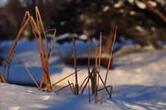 (StephenZacharias) Tags: winter sunset shadow snow canada winnipeg manitoba deadstuff 8750 bonnycastlepark