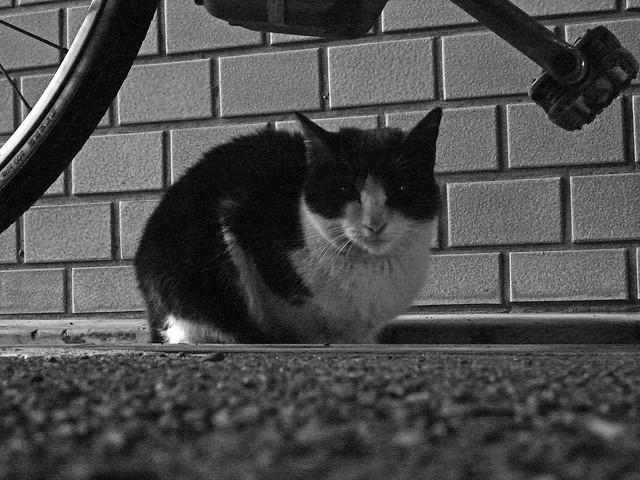 Today's Cat@2011-01-07