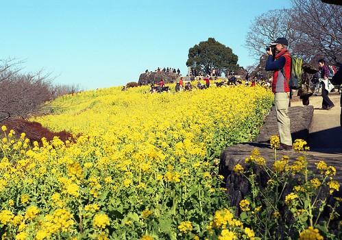 吾妻山公園#2