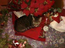 Stella's Christmas Cat