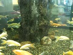 さいたま水族館入ってすぐの円形水槽