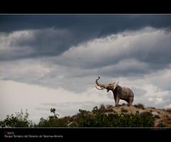 OASYS Parque Temtico del Desierto de Tabernas-Almera (scarabaeus sacer) Tags: parque 9 animales soe 2010 tabernas oasys flickraward theunforgettablepictures platinumheartaward a3b nikond300 jatm64 bestcapturesaoi elitegalleryaoi flickraward5