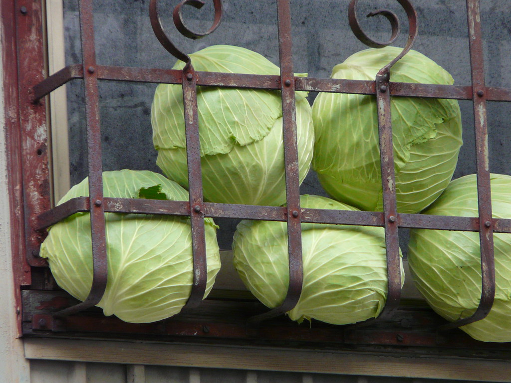 Storing Cabbages, Drying Shoes