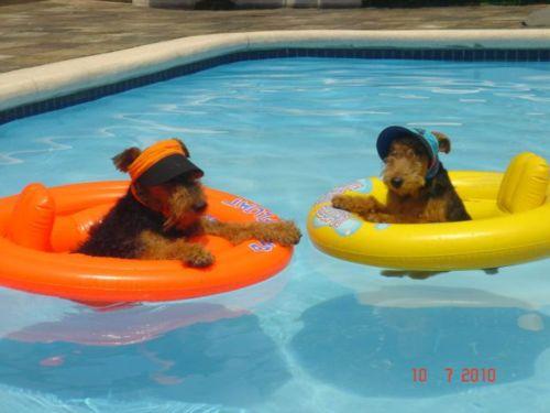 swimmypups
