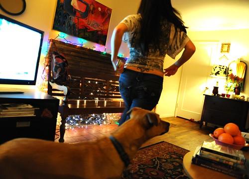 Dani's antlers, Rosie, TV, oranges, bench, Wedgwood, Seattle, Washington, USA by Wonderlane