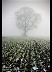 lines......... (Chrisconphoto) Tags: mist cold tree lines fog freezing crop crank chrisconway billinge