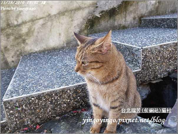 台北瑞芳(侯硐站)貓村20101128_R0016290