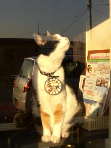 たま駅長/Station Master Tama