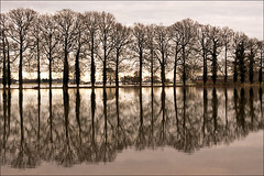 Reflections on flooded farmland (Foto Martien (thanks for over 2.000.000 views)) Tags: winter holland water netherlands dutch flooding flood nederland rhine ijssel veluwe uiterwaarden gelderland leuvenheim brummen floodplain riverijssel wateroverlast spankeren rijndelta a550 floodedfarmland rhinedelta martienuiterweerd carlzeisssony1680 martienarnhem gelderseijssel sonyalpha550 elitegalleryaoi mygearandme mygearandmepremium martienholland mygearandmebronze mygearandmesilver mygearandmegold mygearandmeplatinum mygearandmediamond floodedlandscape fotomartien overtstroming overstroomdeakker overstroomdelandbouwgrond overstroomdlandschap floodedcultivatedfield