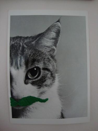 Catstache