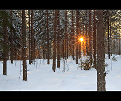 Bursting through (Barry_Madden) Tags: trees sun snow forest suomi finland landscape countryside explore talvi lappeenranta sunflare