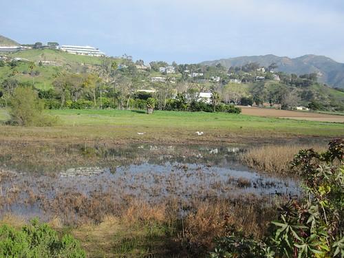 wetland 015