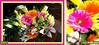 HAPPY BIRTHDAY FOR LYNNE, WITH LOVE.  http://www.flickr.com/photos/33865452@N00/ (Lynn English) Tags: stargazer lilies gerbera topshots flowersarebeautiful flickrsfantasticflowers flickrsportal