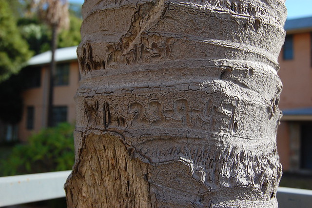 inscribed tree