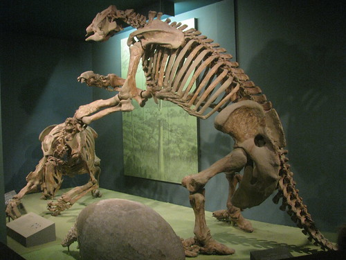 1000  ideas about Ground Sloth on Pinterest | Prehistoric, Fossils ...