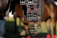 Polo (The Dolly Mama) Tags: horse taylor ponies polo girths