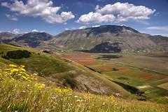 Castelluccio tra i fiori e i monti (Ale*66*) Tags: castelluccio fioritura blooming montisibillini italy umbria landscape paesaggio 2016
