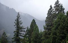 IMG_3493 (kz1000ps) Tags: tour2016 clouds oregon washingtonstate columbiariver border columbiarivergorgenationalscenicarea fog mist grey pinetrees cliffs canyon cascaderange