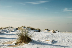 Lonely grass (Danil) Tags: november winter snow holland ice beach nature netherlands sinterklaas strand waddenzee landscape nikon daniel dune nederland noordzee natuur northsea groningen friesland schiermonnikoog landschap eiland duin beachgrass d300 helmgras waddengebied