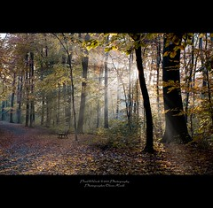 . ..sunbeams.. . (oliver's | photography) Tags: trees sun nature forest photoshop canon landscape eos yahoo google flickr raw image  hannover adobe 1740mm sunbeams 2010 lightroom copyrighted pixelwork canonllens 500px thesecretlifeoftrees canon1740f4lusmgroup thelightpainterssociety oliverhoell magicunicornverybest theacademytreealley pixelwork10photography photographeroliverhoell allphotoscopyrighted