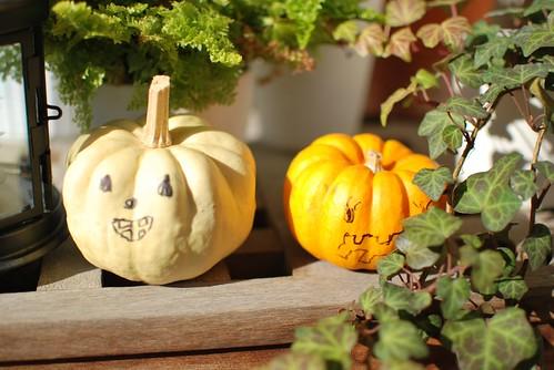 Halloween pumpkin's future