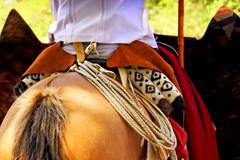 Semblanza saltea (Eduardo Amorim) Tags: horses horse southamerica argentina caballo cheval caballos lazo cavalos pferde poncho cavalli cavallo gauchos pferd pampa pala apero chevaux gaucho amricadosul gacho campero amriquedusud provinciadebuenosaires recado gachos sudamrica sanantoniodeareco suramrica amricadelsur areco sdamerika pilchas norteos pilchasgauchas recao pampaargentina camperos americadelsud americameridionale campeiros guardamonte campeiro guardamontes eduardoamorim peruvianhorse salteos peruvianhorses peruvianpasohorses peruvianpasohorse caballodepasoperuano peyones pampaargentino caballosdepasoperuano cavalosdepasoperuano chevauxpasopruvien cavalodepasoperuano chevalpasopruvien peleros sobrepeyn