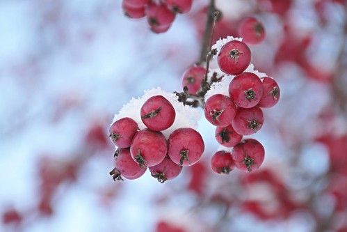 Морозное настроение: яблочная свежесть