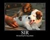 Signore, non toccare il cane per favore