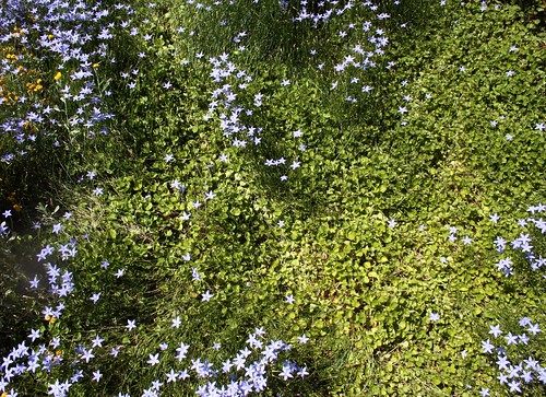 more of leanne's garden