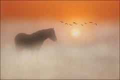 Beautiful winter moments! (adrians_art) Tags: winter horses mist birds silhouette fog sunrise geese flight equine