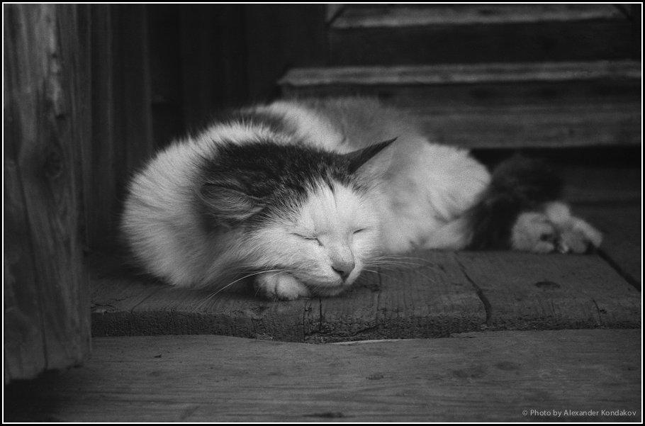 CAT 1986 © Photo by Alexander Kondakov