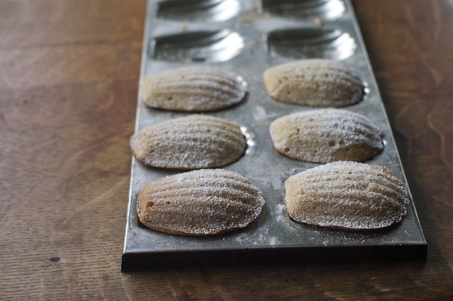honey-spice madeleines