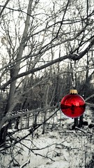 Lone Ornament (Apelseed) Tags: snow woods alone ornament lone 365