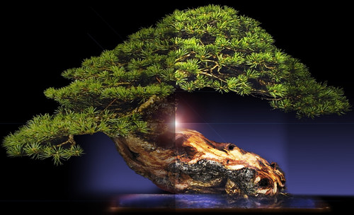 """Bonsai057 • <a style=""""font-size:0.8em;"""" href=""""http://www.flickr.com/photos/30735181@N00/5261941316/"""" target=""""_blank"""">View on Flickr</a>"""
