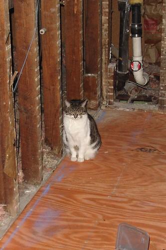 Catspection
