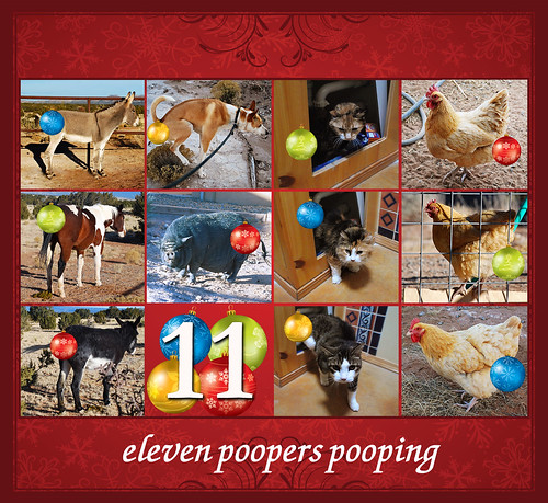 eleventh day of Petmas