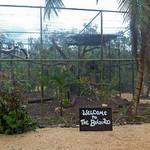 20101201 Welcome to the 'Post Hurricane Richard' Belize Zoo.jpg thumbnail