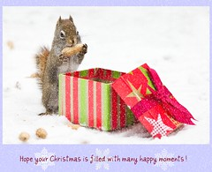 For Monique (Nancy Rose) Tags: christmas eye snowflakes squirrel bokeh eating seeds card gift present peanut chilly ribbon hungry greeting picnik gettyholidays2010