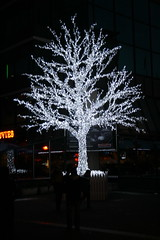 Christmas lights consume tree