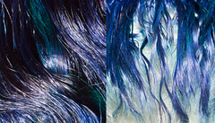Day 22 of 365 - Year 2 (wisely-chosen) Tags: selfportrait me diptych december bluehair 2010 cameraraw 365days naturallycurlyhair manicpanicshockingblue adobephotoshopcs5extended manicpanicaftermidnightblueamplified