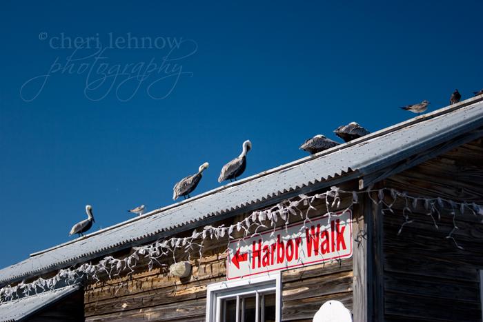 IMG_3153_pelicans.jpg